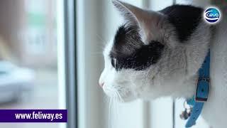 Riñas de gatos: porque los  gatos se pelean constantemente.