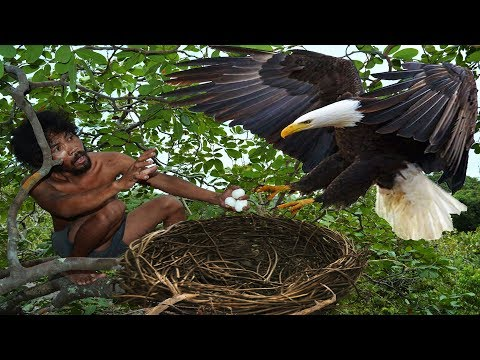 A forest man found a eagle nest on the higher tree steal eagle eggs and cooked in mountain hole