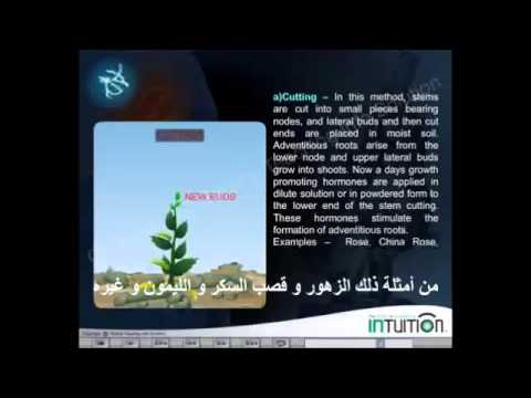 Xxx Mp4 Veditative Reproduction In Plants Translated To Arabic 3gp Sex