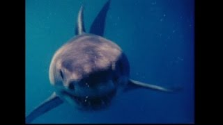"RON & VAL TAYLOR'S ""INNER SPACE"" MAN EATER: THE GREAT WHITE SHARK (1973) -NEWSANDMOVIESRADIO.COM"