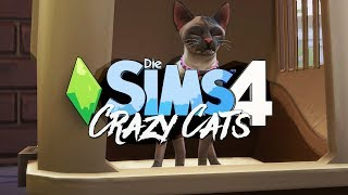 Poloch #5 🐈 Die Sims 4 Hunde & Katzen