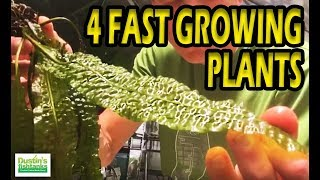 Four Fast growing Fish tank Plants and pink gravel