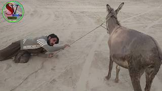 Most Funny Video December 2017-Boy Ka Donkey Se Izhar Muhabbet   Sono Vines