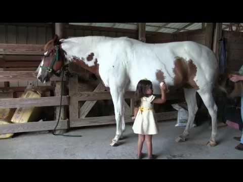 Xxx Mp4 Horse Meets Girl 3gp Sex