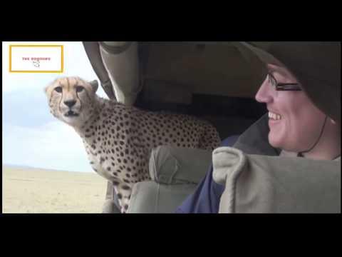 Stupid Humans vs Smart Wild Animals