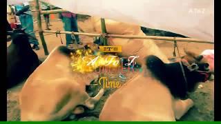 Hamba Hamba A A 🐄 songs _A To Z Videos
