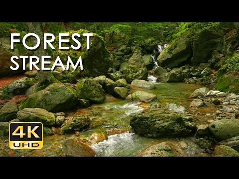 4K Forest Stream Relaxing River Sounds No Birds Ultra HD Nature Video Relax Sleep Study
