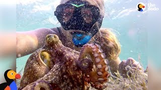 Woman And Octopus Are Best Friends - ELORA & EGBERT | The Dodo