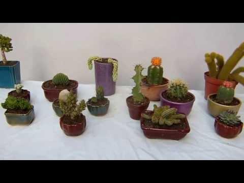 Como cultivar tus cactus