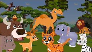 Диви животни | Вълк,  жирафа, слон, мечка, маймуна | Образователни клипчета за деца