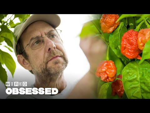 How This Guy Made the World s Hottest Peppers Obsessed WIRED