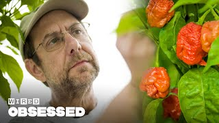 How This Guy Made the World's Hottest Peppers | Obsessed | WIRED
