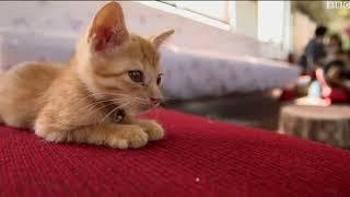 قطار القطط في اليابان ومحاولة لمنع قتلها