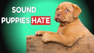5 Sounds Puppies Hate All Time | HQ
