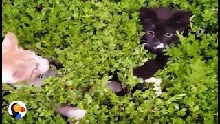 Magical Kitten Bush: Funny Kittens Play Peek-A-Boo | The Dodo
