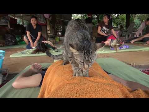 Xxx Mp4 Cat Give Massage To Human 3gp Sex