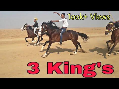 Xxx Mp4 Horse Race In Vekriya Rann 2019 कच्छ के 3 किंग घोड़ो कि रेस 3gp Sex