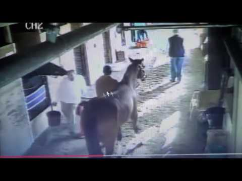 Xxx Mp4 Man Panics When Horse Gives Him A Kiss Poor Cone Gets Assaulted For No Reason Racehorse Abuse 3gp Sex