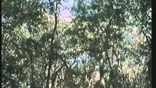 BBC Amazon The Flooded Forest 01
