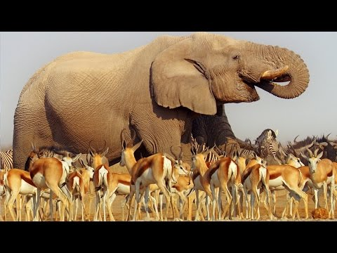 Nature Makes You Happy - BBC Earth