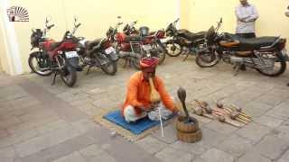 Шоу със змия, Индия