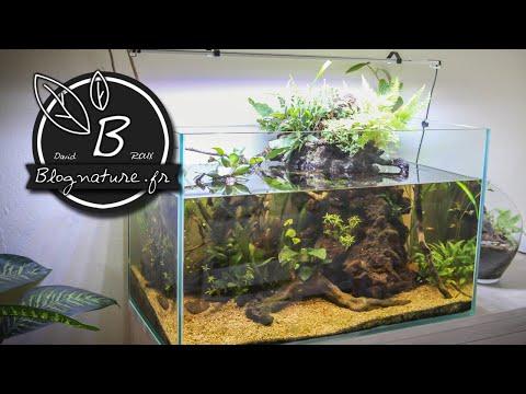 Un aquarium lowtech ouvert sans filtre sans chauffage sans CO2