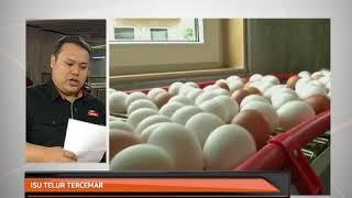 Isu telur tercemar