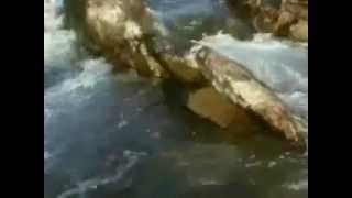 سمك السلمون - فيلم وثائقي