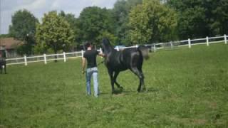 Ej kakve sam konje imo