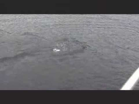 LochNess Monster CAUGHT ON TAPE!!!!!!
