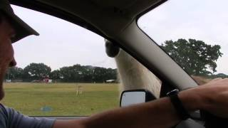 Mike and Robyn's Visit to Franklin Drive Thru Safari