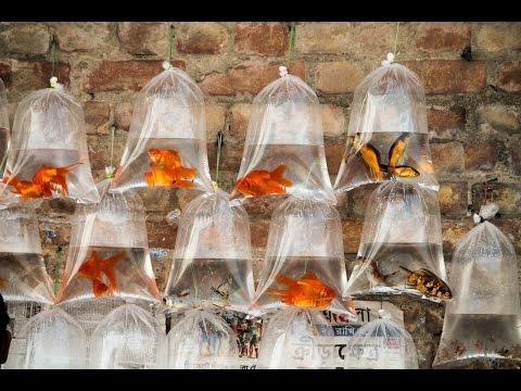 Xxx Mp4 Aquarium Fish Market Of Kolkata Galiff Street 3gp Sex