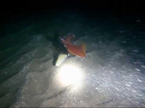 la noche del calamar