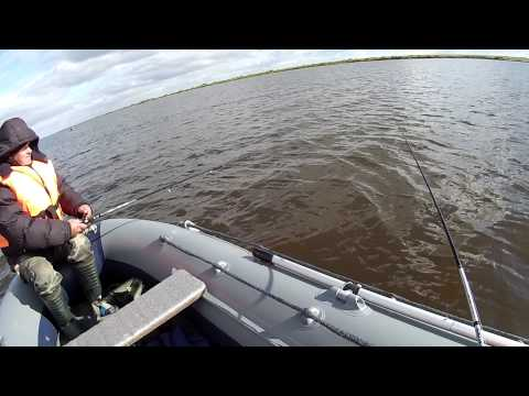 ловля окуня с лодки пвх