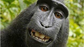 Monkey Selfies And Robot Brothels Among 2018