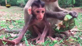 Beautiful Baby Monkey with young Mother. [Angkor Daily148