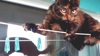 FUNNY and CUTE PETS 2017 [Funny Pets]
