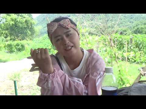 Saib Hluas Nakuj Hmoob Luamphabang 8 8 2018