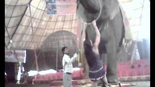अलीगढ नुमाइश में अपोलो सर्कस में करतब दिखाता हाथी