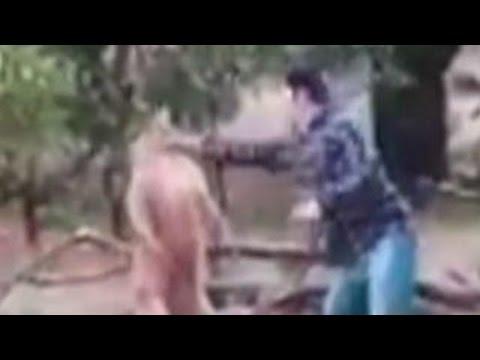 Xxx Mp4 Australian Man Punches Kangaroo To Save Dog 3gp Sex