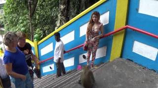 Monkey attacking and humping + hot girl