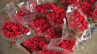 The cost of love: rose prices up ahead of Valentine's Day