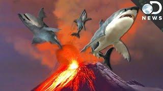 6 Insane Animals That Live In Volcanos