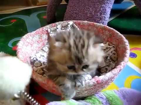El gatito mas tierno del mundo