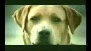 خيانة كلبة