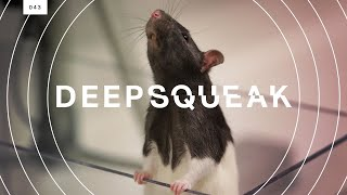 This algorithm decodes rat squeaks and could revolutionize animal research