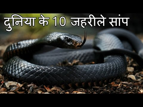 Xxx Mp4 दुनिया के 10 सबसे जहरीले सांप Top 10 Most Venomous Snakes In The World 3gp Sex