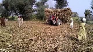 Sugur cane load and Massey 385