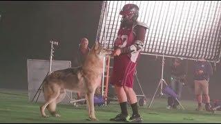 Teen Wolf 6x11 lacrosse & wolf behind the scenes