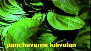 Panchavarna kilivalan